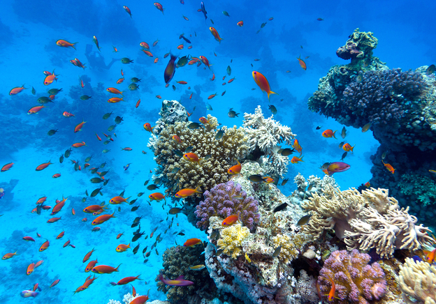 Discover the Hidden History of a Manganese Nodule: The Treasures of the Deep Sea