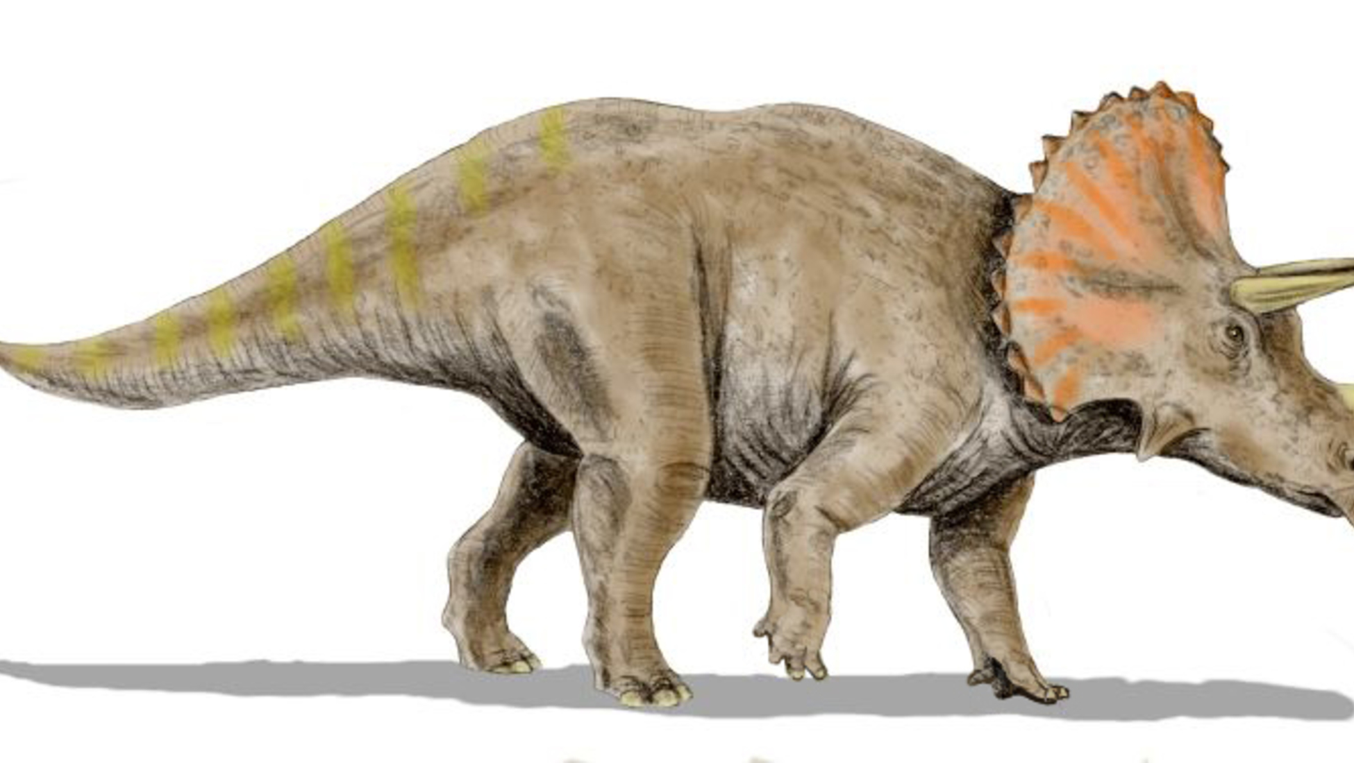 an introduction to the fossilized story of mr allosaurus Introduction the prehistoric reptiles known as dinosaurs arose during the middle to late triassic period of the mesozoic era, some 230 million years ago  since then, dinosaur fossils have .