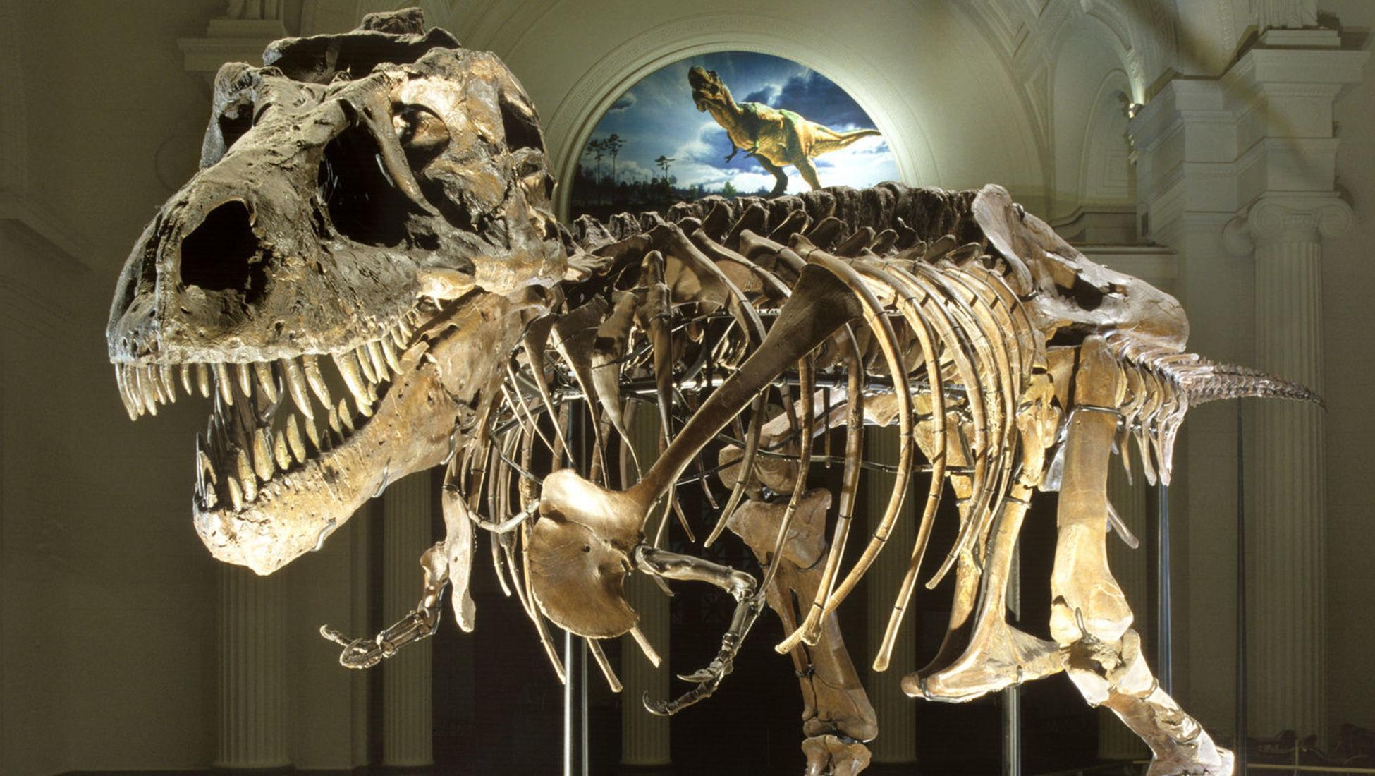 dating Dinosaur fossiler