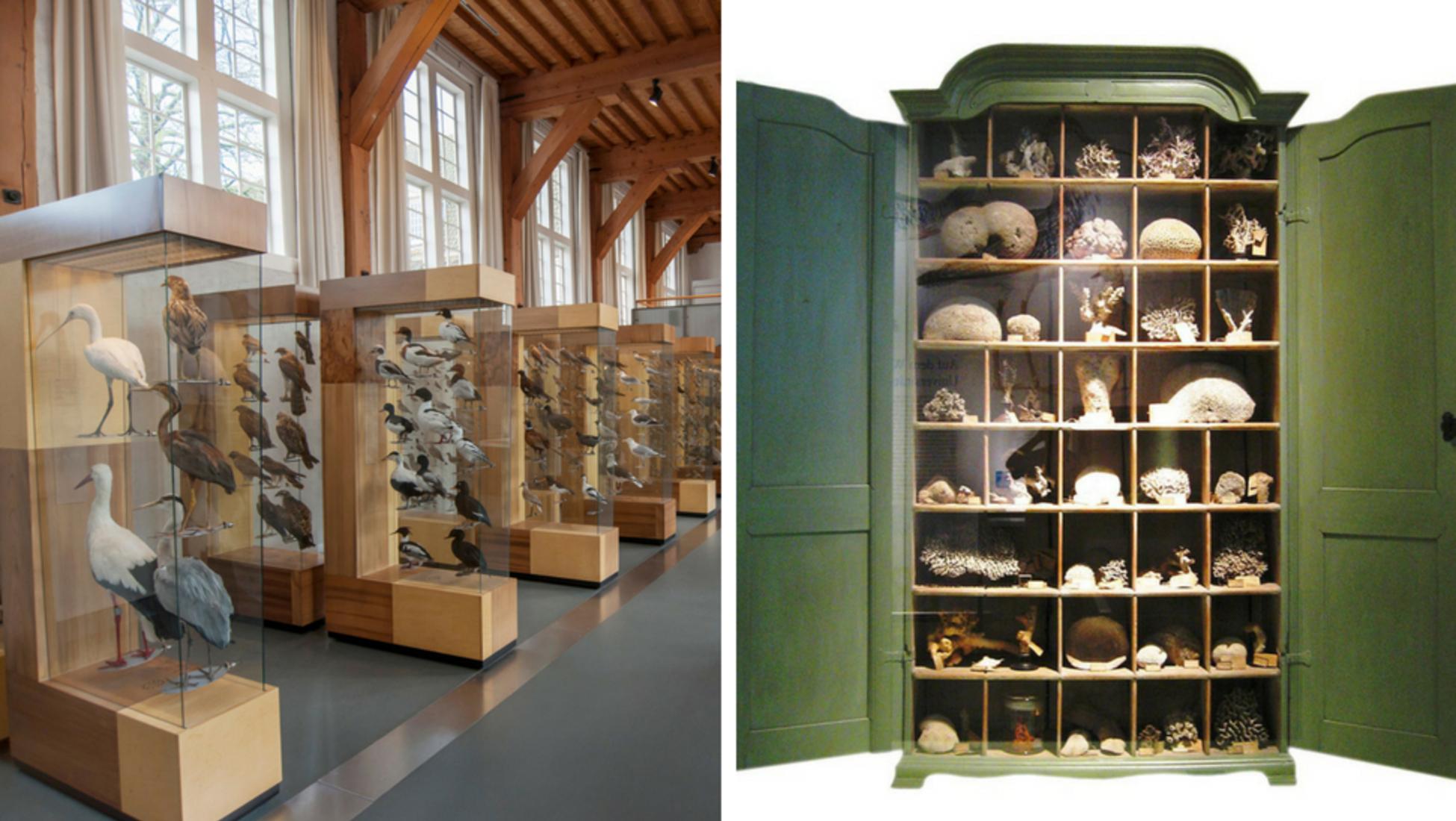 Des Chambres De Merveilles Aux Cabinets De Curiosites Notre Expert