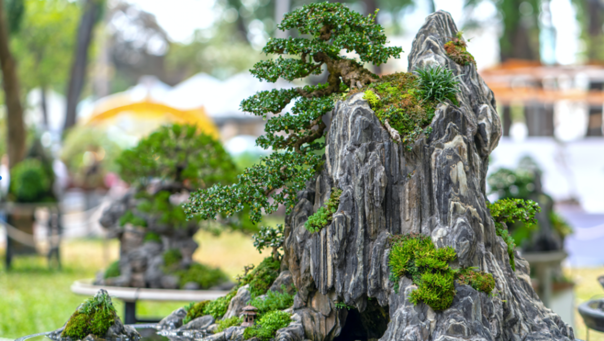 The Ancient Art Of Bonsai Cultivating Japanese Aestheticism Catawiki